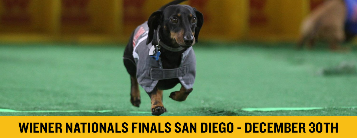 Wiener National Finals San Diego
